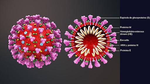 Esquema del coronavirus