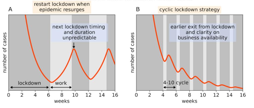 Periodo de teletrabajo y Ciclo de vida de la infección por coronavirus